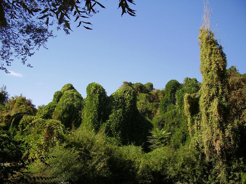Сердце ботанического сада