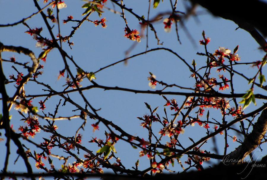 Небо в цветах