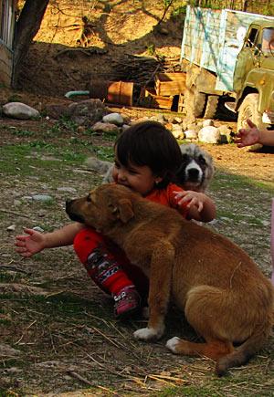 Соня и собачки