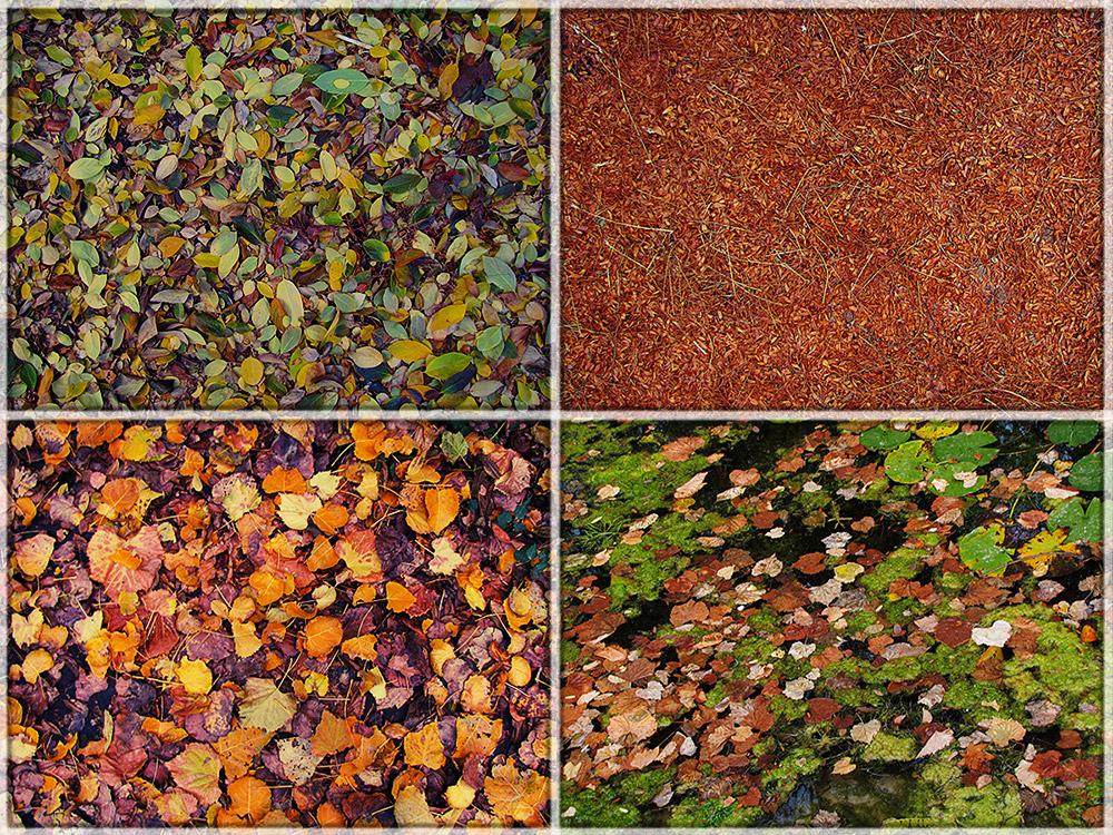 Осенние ковры