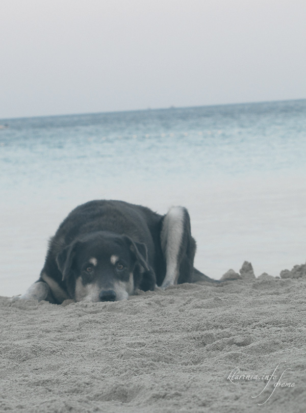 утро в Таиланде, собака на пляже