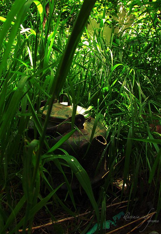 Зеленый апрель в Ташкенте Чайник в траве
