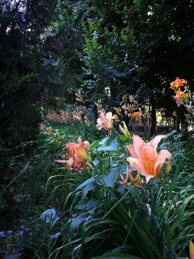 Ташкент ботанический сад 2013