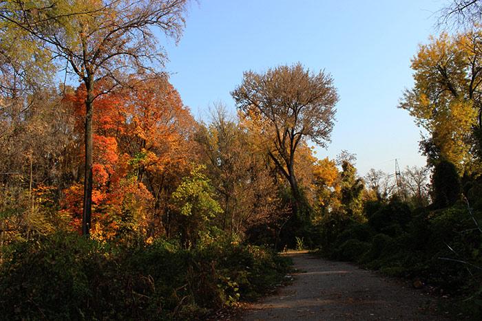 Ботанический сад Ташкента осенью