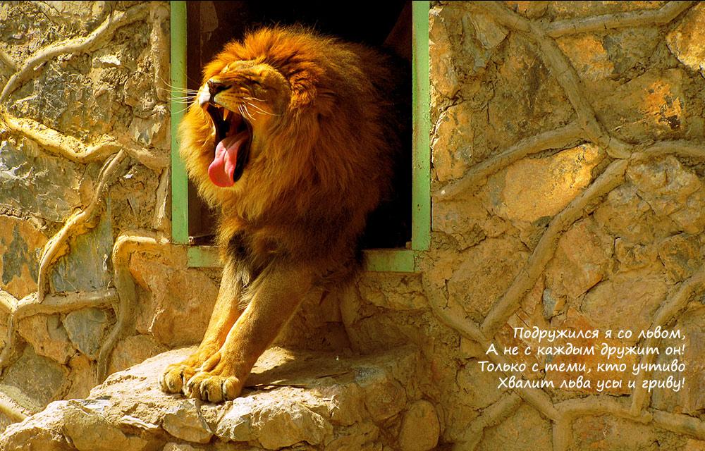 Стих про льва