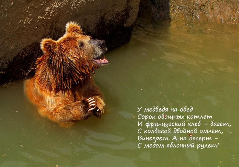 Детские стих про медведя в зоопарке