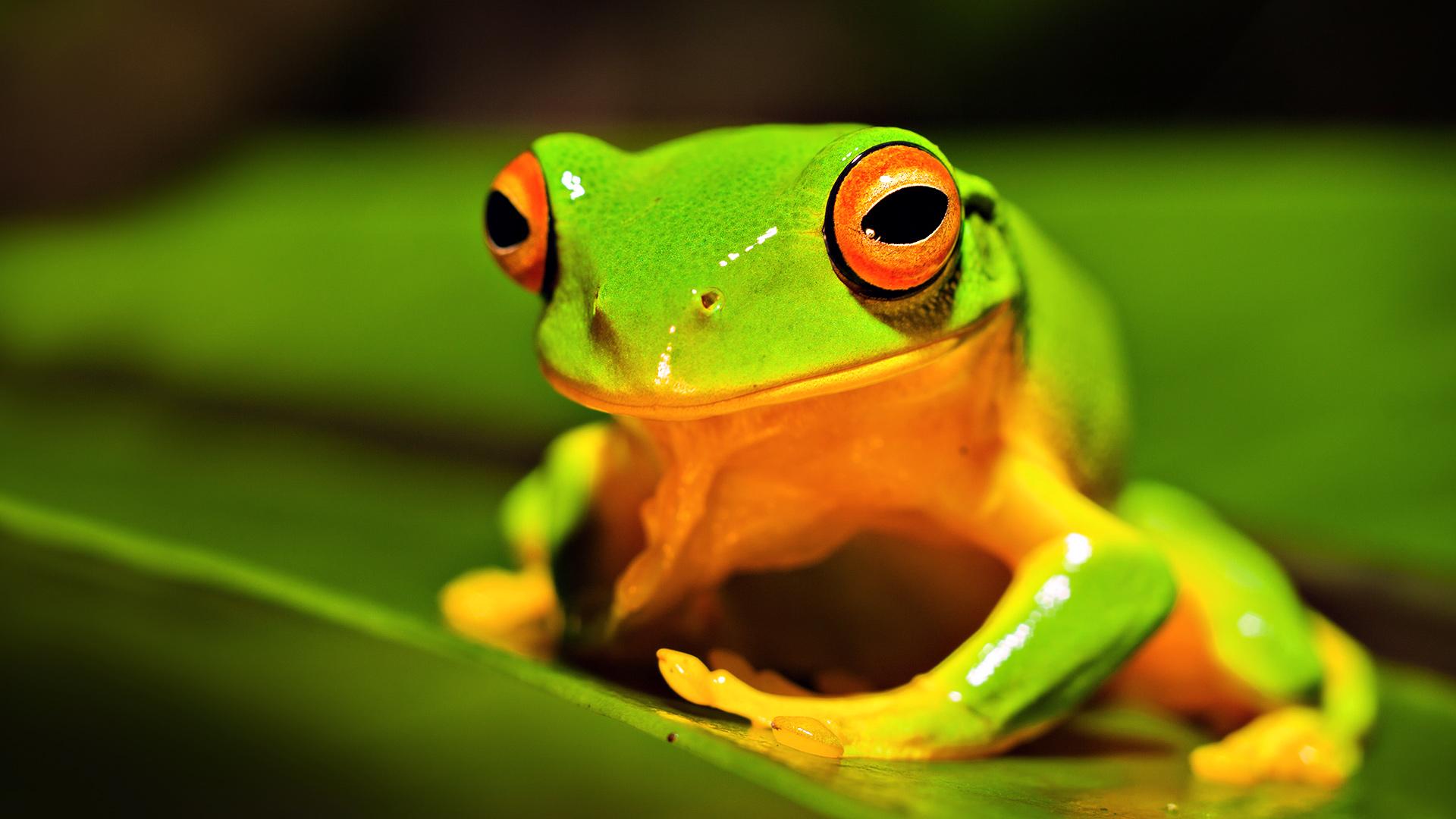 +что +такое Олицетворение Веселый хитрый лягушонок