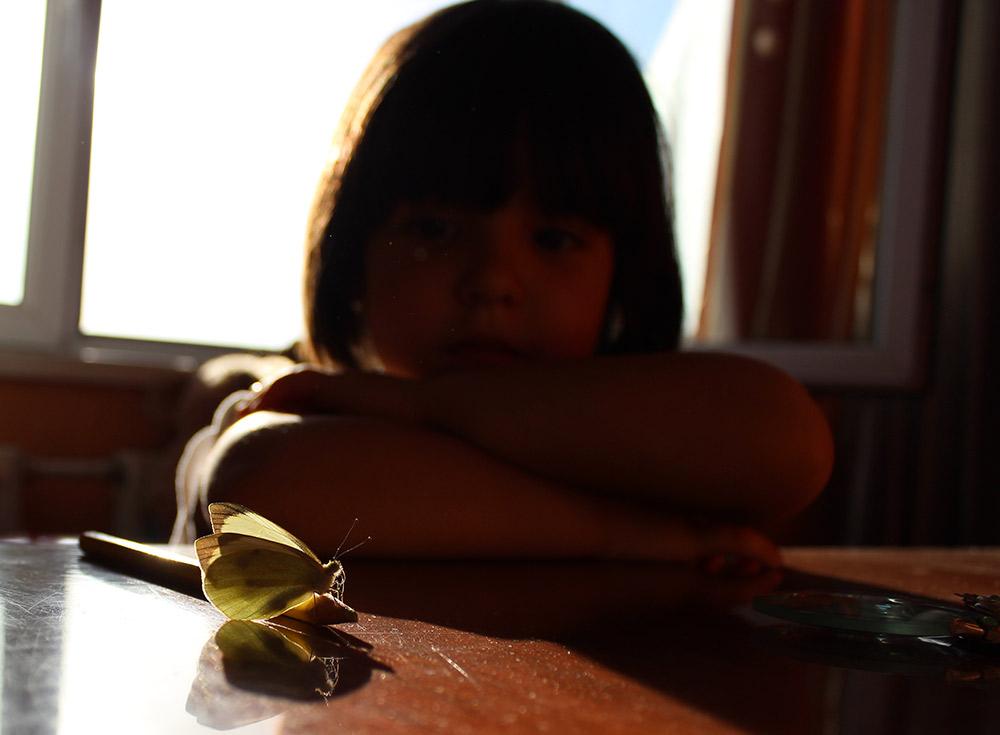 Бабочка из коробки