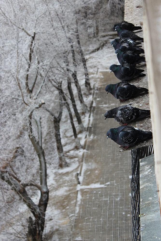 Вид из окна голуби в снегу