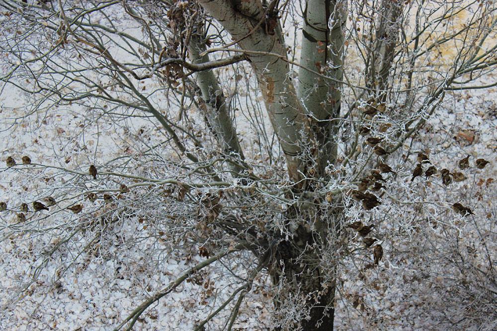 Вид из окна Воробьи в снегу